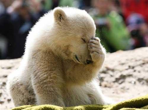 facepalm-polar-bear