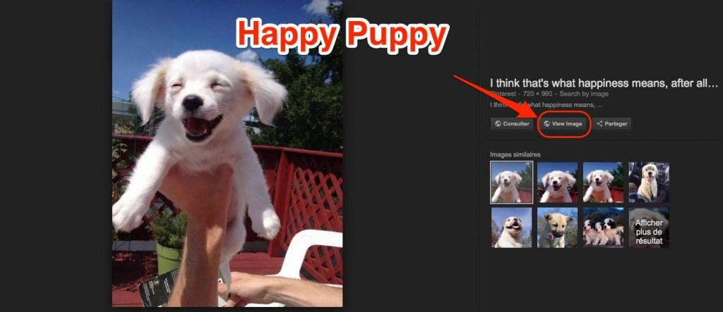 Happy Puppy Google Images