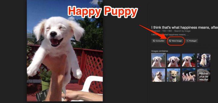 Happy Puppy Google Images