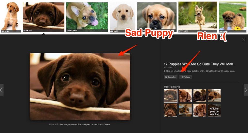 Sad Puppy Google Images